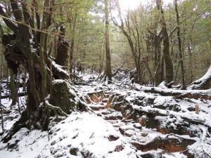 雪の中の白谷雲水峡
