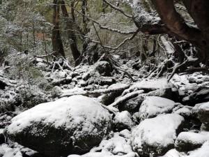 雪の中の苔むす森