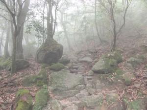 霧の中の白谷雲水峡
