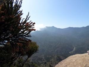 花をつけたスギとともにみる太鼓岩の景色