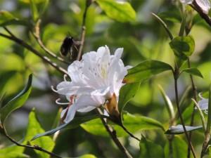 花の香りに引き寄せられた虫