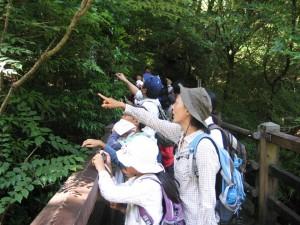 夏休み森林教室&ネイチャークラフト4