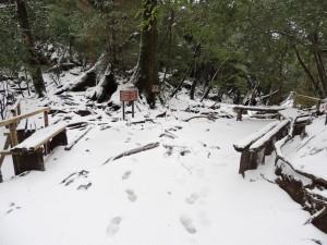 雪の中の白谷雲水峡1