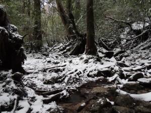 雪の中の白谷雲水峡2