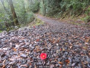 落花したリンゴツバキのある飛流歩道