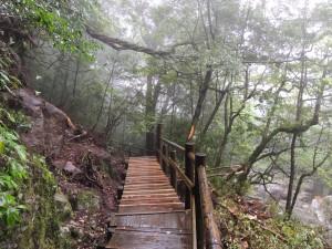 修復後の弥生杉コース2
