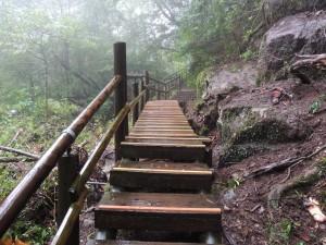 修復後の弥生杉コース