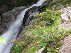 白妙の滝と傍らに咲くサツキ