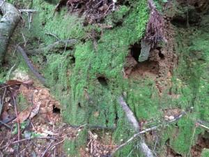 登山道脇の穴